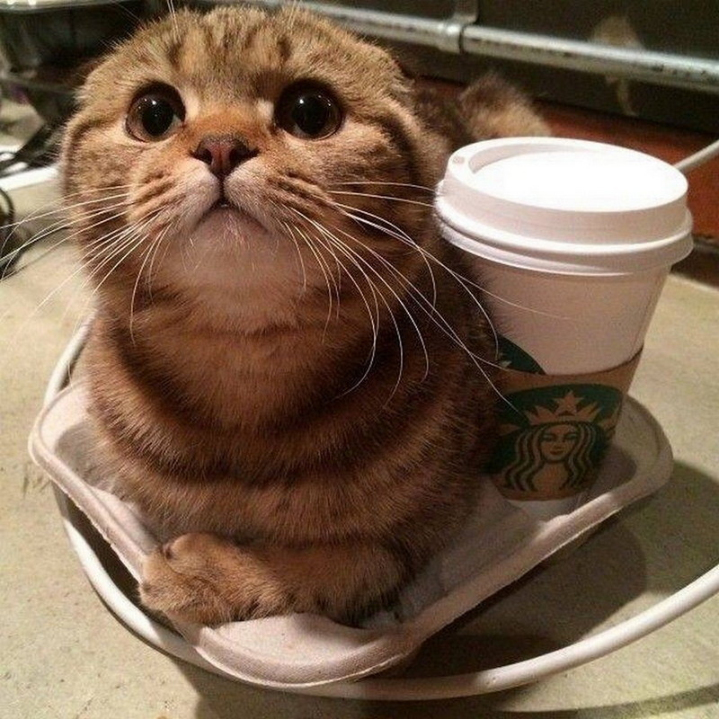 доброе утро с кофе и котиком картинки