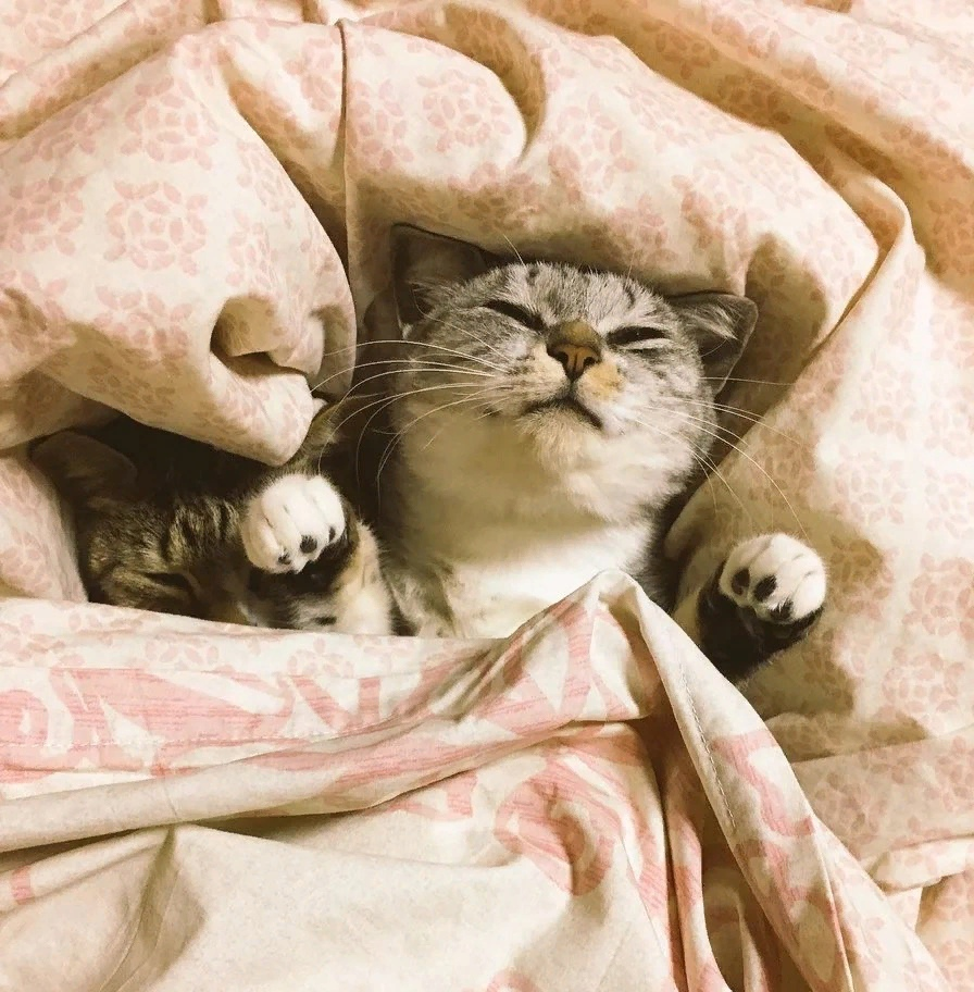 фото котенка под пледом