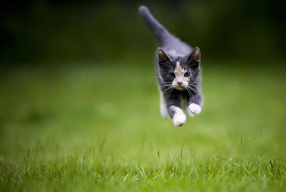 картинка кот бежит на работу европе считается, что