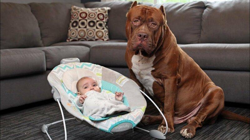 Реакция домашних животных на детей в доме 5