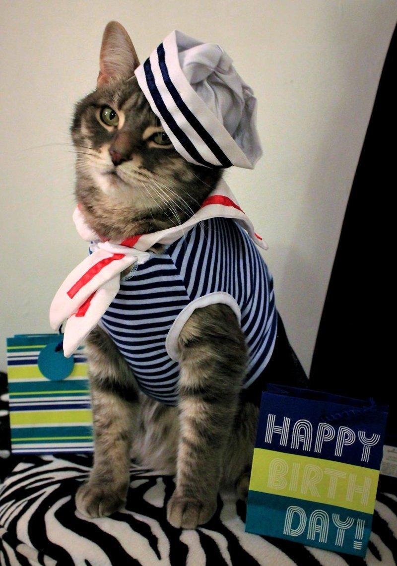 Прикольные картинки кошка в одежде, днем татьяны гифки
