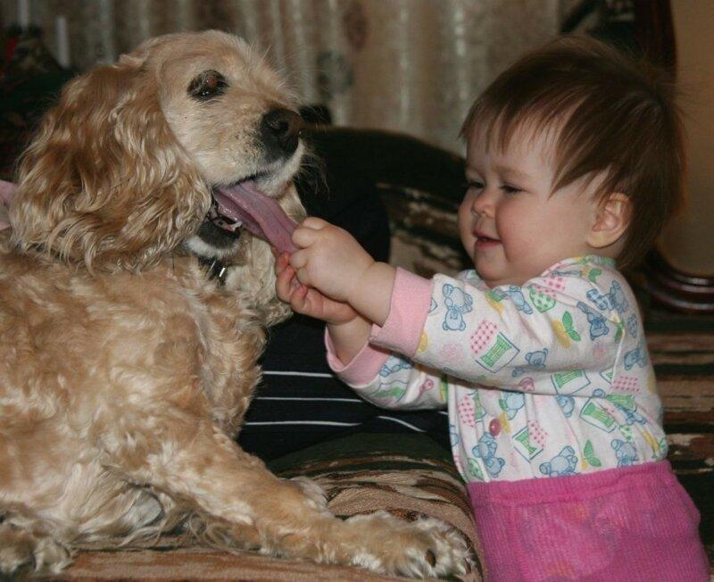 Реакция домашних животных на детей в доме 1