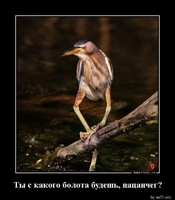 ЮМОР  В ОТКРЫТКАХ  - Страница 3 8ea93609