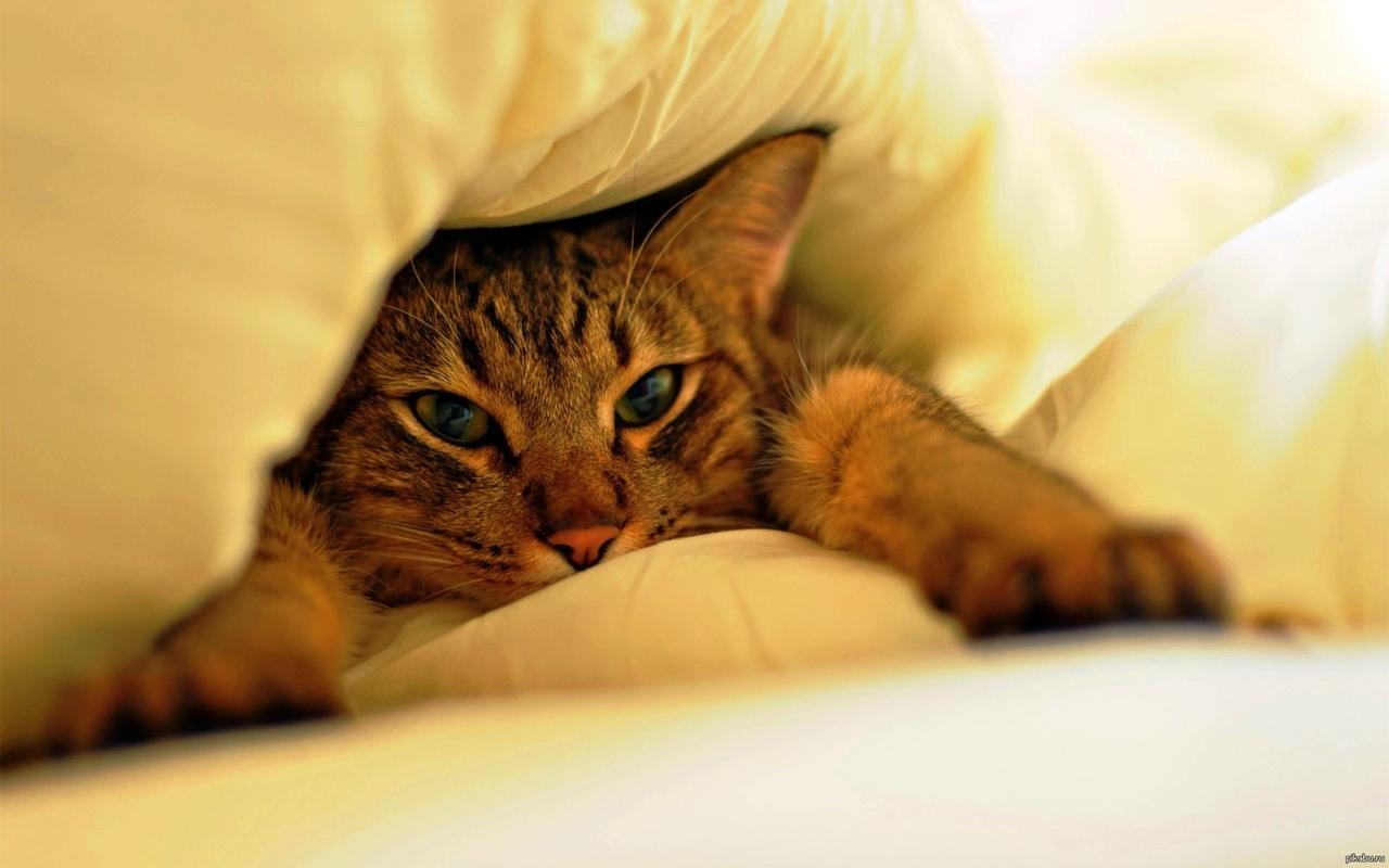 картинки с добрым утром под одеялом нас старается совершать