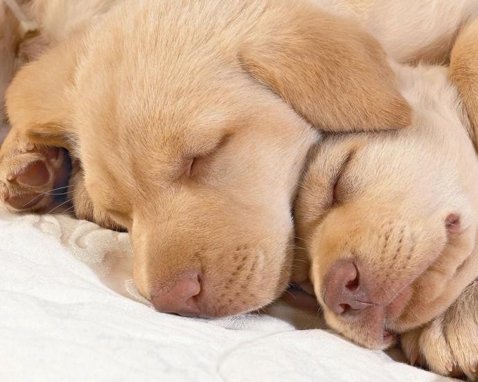 Спящие малявочки
