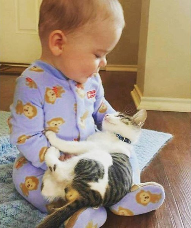 Реакция домашних животных на детей в доме 7
