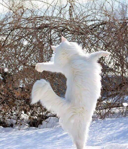 Танцуй так, будто никто не видит 0