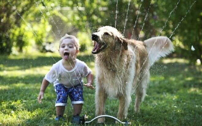 Реакция домашних животных на детей в доме 8