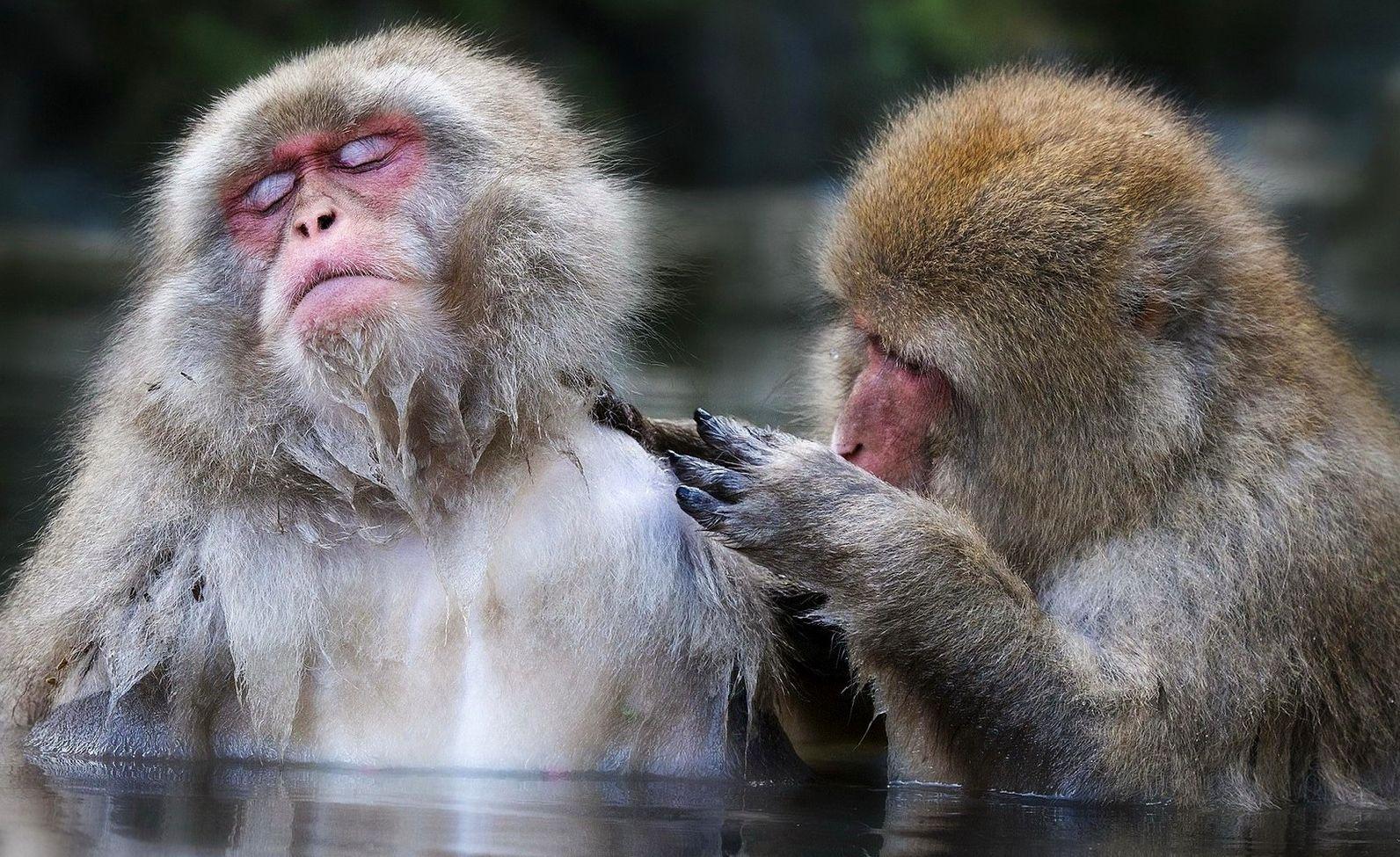 Картинки приколы с обезьяной