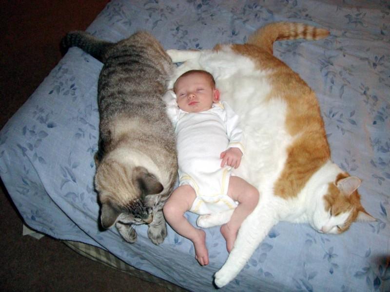 Днем рождения, смешные до слез картинки с котами и младенцами