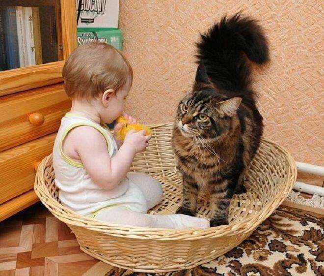 Реакция домашних животных на детей в доме 0