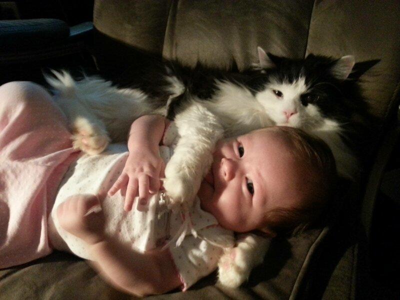 Реакция домашних животных на детей в доме 9