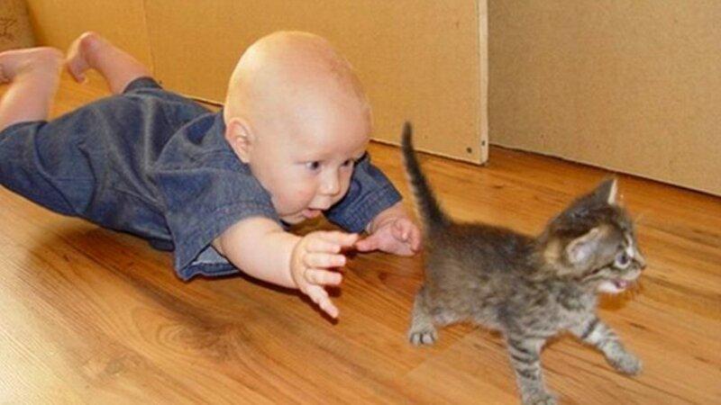 Реакция домашних животных на детей в доме 3