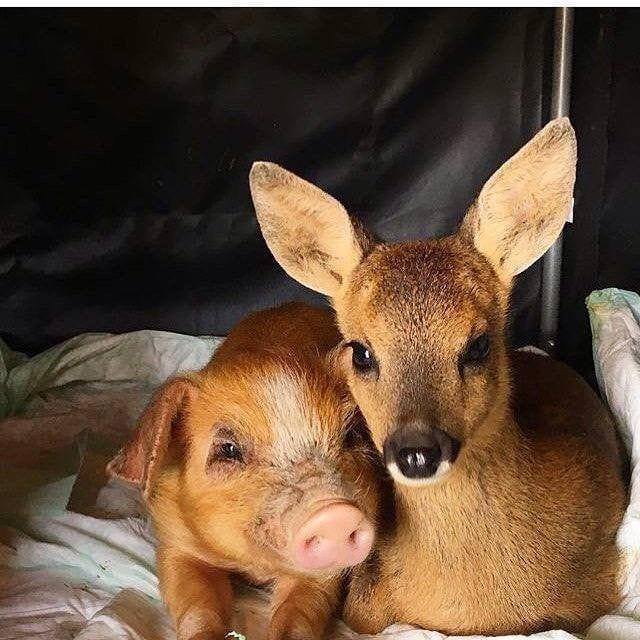 Прелестные фотографии дружбы животных