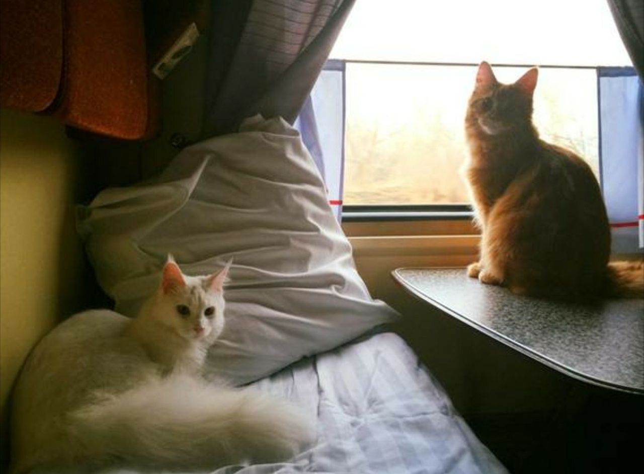 Веселые картинки в поездах, смешные картинки надписями
