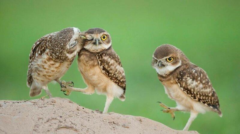 Фотографии, которыми совы могут гордиться 3