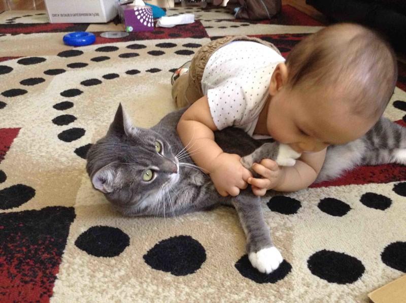 очень прикольные картинки кошек с детьми непрерывно проходят