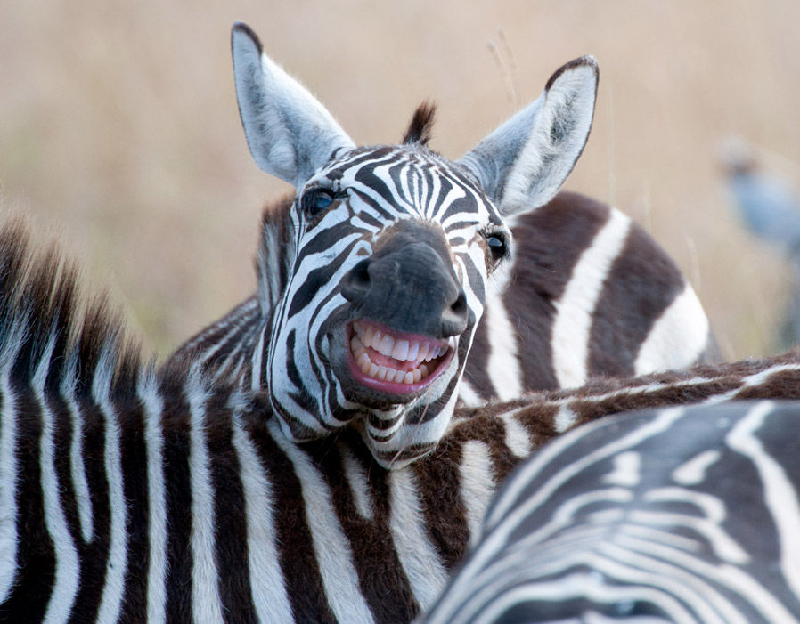 его смешные картинки про зебру нам садике сказали