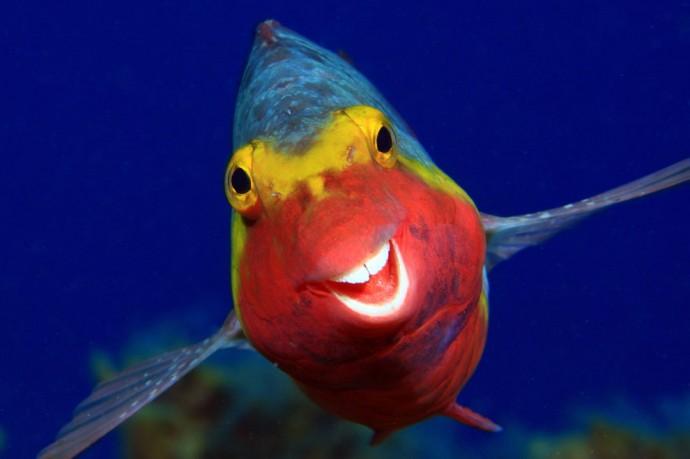 Смешные фотографии животных со всего мира