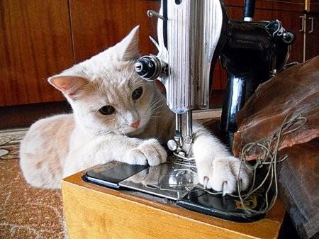 Самые хозяйственные коты